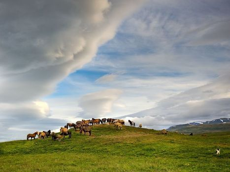 Horses, Iceland - National Geographic Photo of the Day 01/20/13 | The Art of the Horse | Scoop.it
