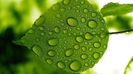 Interview de Frédéric Fallourd sur la Chlorophylle - Phyto-Market.com by Jean-Marc FRAICHE | alternative-sante | Scoop.it