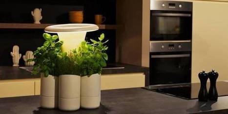 La belle idée pour que les herbes et plantes aromatiques ne meurent plus jamais (La Libre, 6 juillet 2016) | Alumni HEC Liège | Scoop.it