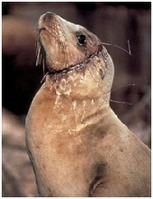 NRDC: Plastic Pollution in our Oceans | Escribir en ingeniería | Scoop.it