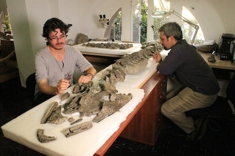 Fossil discovery in Chile reveals new species of giant ancient reptile - The Santiago Times | Ancient History | Scoop.it