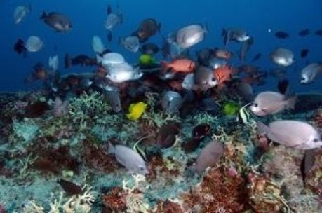Faster way to assess ocean ecosystem health | Marine Conservation Research | Scoop.it