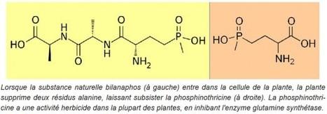 « Comment produire un herbicide naturel » (Wackes Seppi / Andrew Kniss) | Comprendre le réel intérêt de produire une agriculture BIO en France plutôt que d'importer des produits présentant un label pas vraiment Certifié. | Scoop.it