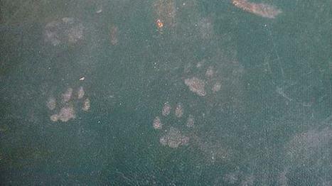 Cat in the house - Dhol Sipahi | Dhol Sipahi | Scoop.it