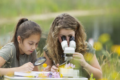 STEM vs STEAM: What's Better?   The Brain and Learning   Scoop.it