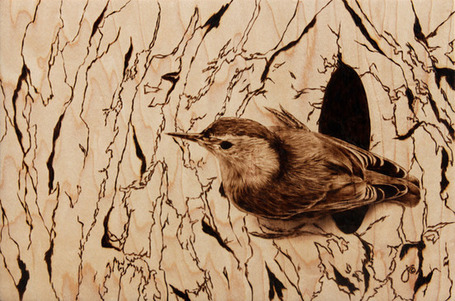 Wood-Burned Illustrations of Animals - My Modern Metropolis | What Surrounds You | Scoop.it