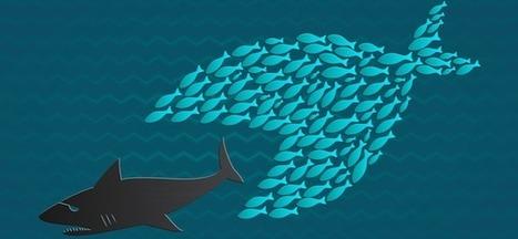 L'économie collaborative doit faire sa mue | Tendances : consommation, alimentation ... | Scoop.it