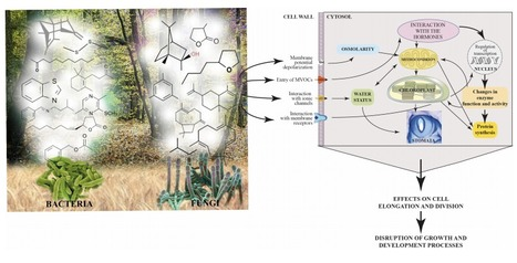 Frontiers: Chemical diversity of microbial volatiles and their potential for plant growth and productivity | Plant growth-promoting actions | Scoop.it