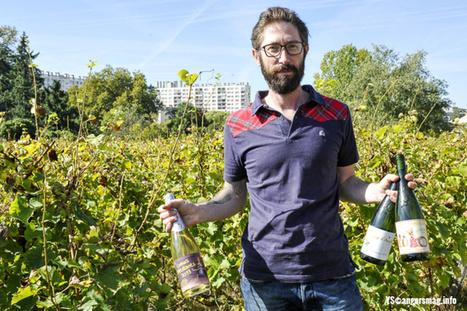 Angers - Ils font les vendanges en cœur de ville | World Wine Web | Scoop.it