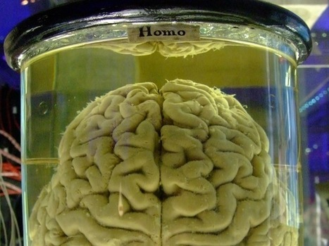 7 Ways Your Brain Makes You A Terrible Investor | Brain and Management | Scoop.it