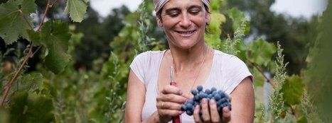 The Grapes of Wrath: France's Great Wines Are Feeling the Heat - SPIEGEL ONLINE   binNotes France - Wine & Culture   Scoop.it