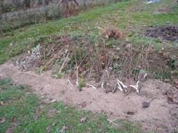 La mise en jauge, mode d'emploi… | planter des bulbes | Scoop.it