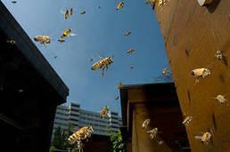 Loi sur la biodiversité : de réelles avancées, malgré des occasions manquées | Chronique d'un pays où il ne se passe rien... ou presque ! | Scoop.it