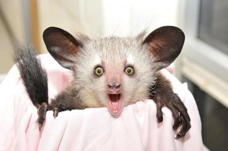 Top 10 Bizarre Animals that Will Stun You | Pakistan first classifed website | Scoop.it