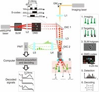 Encoded multisite two-photon microscopy | Neuroscience_technics | Scoop.it