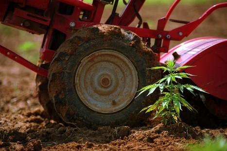 Politics of marijuana are a barrier to scientific research | Beckley News : Cannabis - Marijuana | Scoop.it