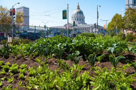 L'agriculture urbaine, qu'est-ce que c'est ? | Rennes - transition énergétique | Scoop.it