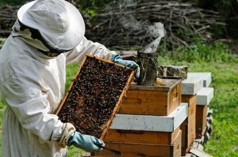 Romania benefits from 21.5 million euros for National Beekeeping Programme 2017-2019 | L'apiculture dans le monde | Scoop.it