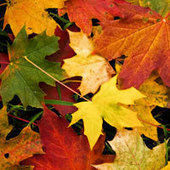 Autumn-Themed Classroom Resources | Education Today and Tomorrow | Scoop.it