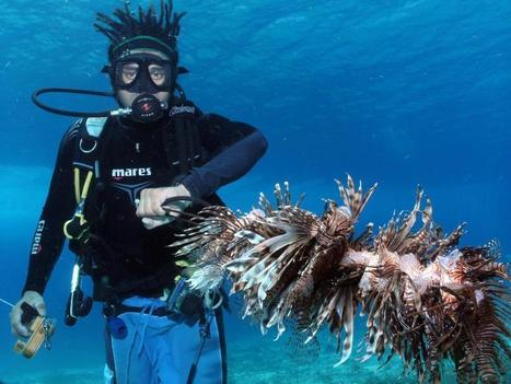 From despair to repair: Dramatic decline of Caribbean corals can be reversed | Sustain Our Earth | Scoop.it
