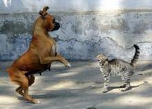 Chien ou chat? Ce que Félix et Médor disent de votre personnalité... | CaniCatNews-actualité | Scoop.it