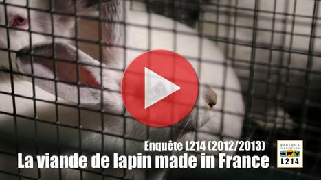 Enquête dans 8 élevages de lapins utilisés pour la viande   Éthique et animaux   Nature Animals humankind   Scoop.it