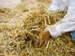 Biotricity to turn straw to energy in Irelands first biomass power plant | bioenergy crops | Scoop.it