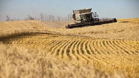 Canada's farmers yield record crops - The Globe and Mail | Commodities, Resource and Freedom | Scoop.it