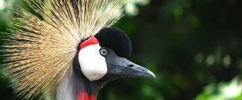 Birds in Uganda   Uganda Travel Ideas   Scoop.it