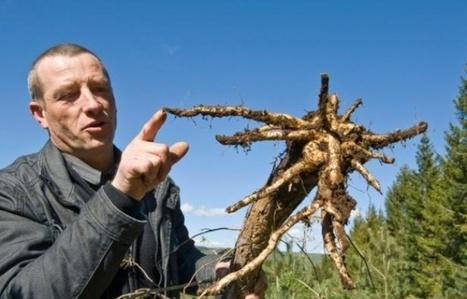 Les rats taupiers, ennemi public n°1 dans le Massif Central | Les colocs du jardin | Scoop.it