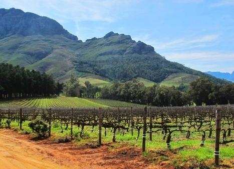 Oenotourisme:top 5 des pays où vin et voyage font bon ménage | Oenotourisme | Scoop.it