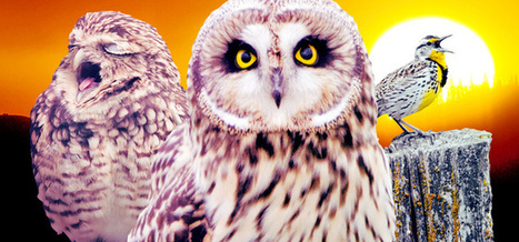 What Successful Night Owls Get Done Before Bed | Business Updates | Scoop.it