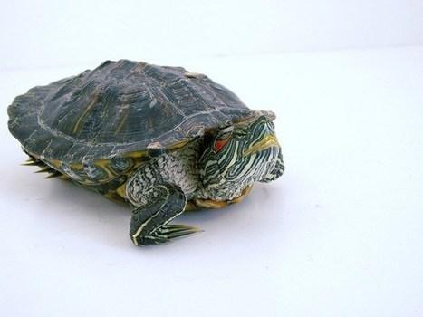 Management : ces tortues qui freinent l'innovation   management   Scoop.it
