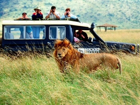 Top 4 Breath-taking Spots for Safaris in Africa | Africa Travel | Scoop.it