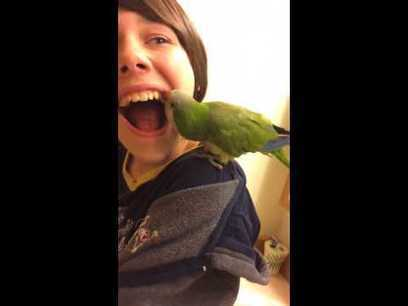 Cool YouTube Video Of Parrot Pulling boys Tooth Out!!! | Orthodontist in Mesa and Gilbert AZ | Scoop.it
