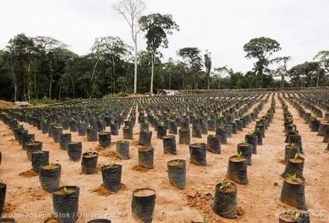 Herakles Farms peut poursuivre ses opérations de déforestation | developpement durable | Scoop.it