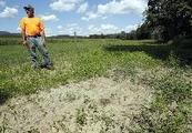 Farmers grappling with Irene even a year later  | ajc.com | North Carolina Agriculture | Scoop.it