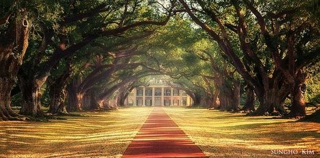 Tweet from @BestOfPict | Oak Alley Plantation: Things to see! | Scoop.it