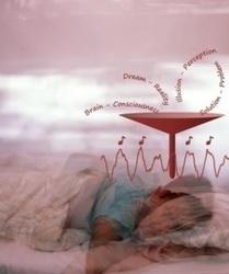 Des zones de sommeil dans le cerveau quand d'autres ne dorment pas ! | DORMIR…le journal de l'insomnie | Scoop.it