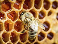 Des microplastiques jusque dans le miel ! | Toxique, soyons vigilant ! | Scoop.it