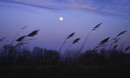 Cultiver avec la lune, comment les phases lunaires influencent l'agriculture   Luc Oberson   Scoop.it