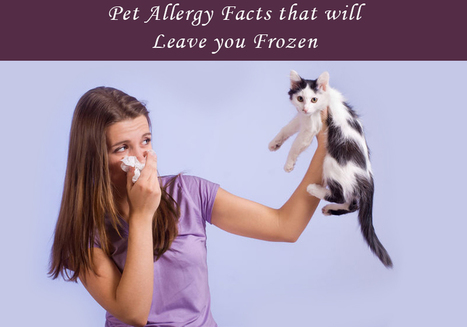 Pet Allergy Facts That Will Surprise You – Dog And Cat Allergies | BestVetCare | Pet Care | Scoop.it