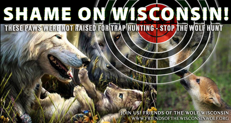 Wolf hunting still divides Wisconsin : Friends of the Wolf Wisconsin, has a response ... | IDLE NO MORE WISCONSIN | Scoop.it