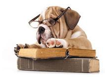 Dog 3.0 - Il guinzaglio invisibile: Il tuo cane... è intelligente? | Cognitivism | Scoop.it