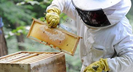Justice : les pesticides de Syngenta tenus responsables du déclin des abeilles | Abeilles, intoxications et informations | Scoop.it