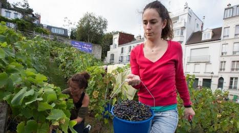 Vive le raisin de Montmartre  / la fête des vendanges de Montmartre démarre aujourd'hui ! | Le vin quotidien | Scoop.it