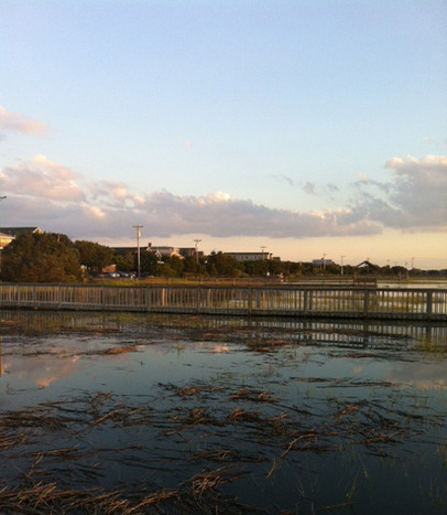 Couture and The Kitchen Sink: Weekend Snapshot - Pawleys Island   Explore Pawleys Island   Scoop.it