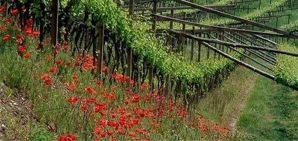 Manuale di Conversazione per Eno-turisti | World Wine Stories | Scoop.it