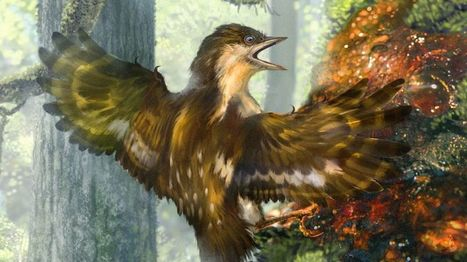 Ancient birds' wings preserved in amber - BBC News | Jeff Morris | Scoop.it
