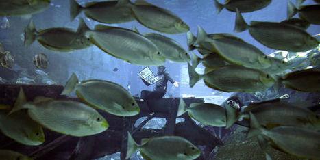 «Ne transformons pas notre terre et nos océans en une gigantesque poubelle» | Ecotourisme | Scoop.it